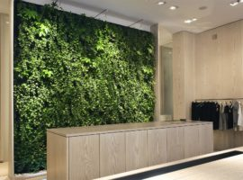 Plantenwand Natuurlijke Wand Planten Scheidingswand Intermontage